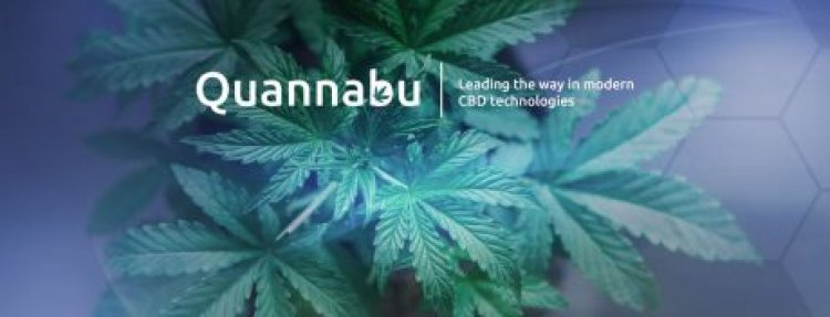All About Quannabu, the Cryptocurrency Built for the Cannabis Industry